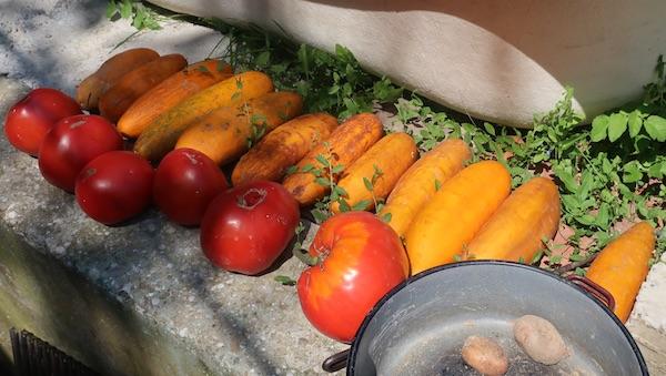 Đurđica Francin iz Gornje Podgore sama skuplja sjeme starih sorti povrća (Fotografija Božica Brkan)